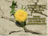 Perseverance - yellow flower sunlight